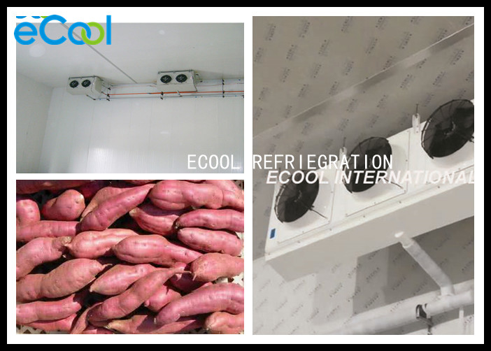Sweet Potato Cold Storage Of Fruits And Vegetables Humidity Control